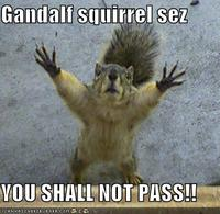 You shall not pass (squirrel)